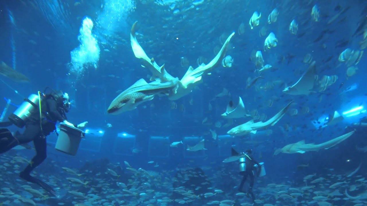 singapore sea aquarium main enclosure at sentosa 2014
