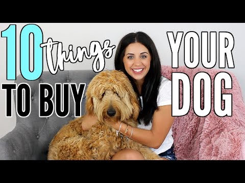 10 THINGS TO GET YOUR NEW PUPPY! WITH MY GOLDENDOODLE DUDE!