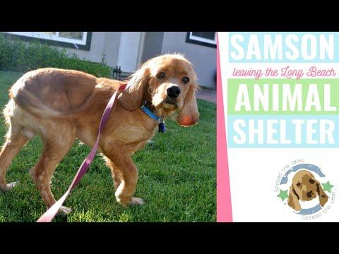 Samson leaves the Long Beach Animal Shelter!  (4-02-13)