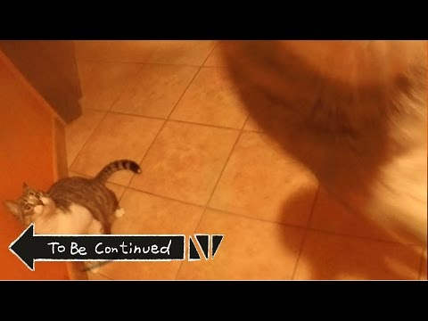 Funny Cats To Be Continued... ORIGINAL
