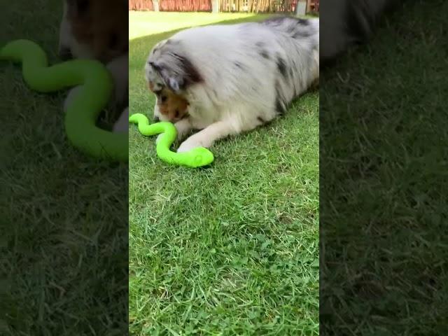 Fiete mit der Snack Snake