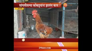 सांगली | काका काका म्हणून ओरडणारा कोंबडा