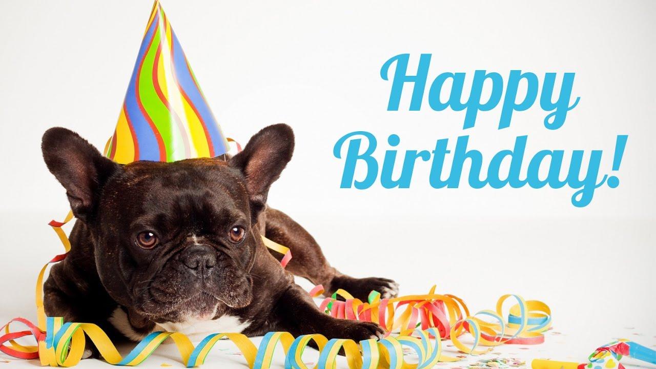 Afbeeldingsresultaat voor happy birthday french bulldog