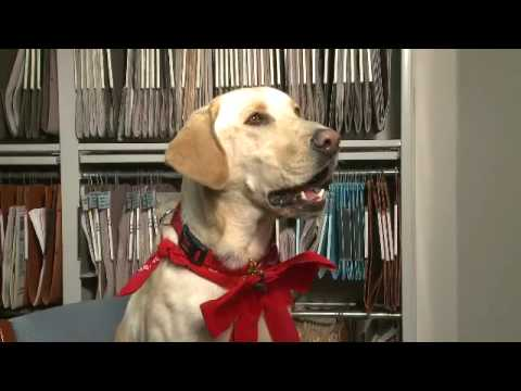 Marley & Me Interview With Jonah the Dog