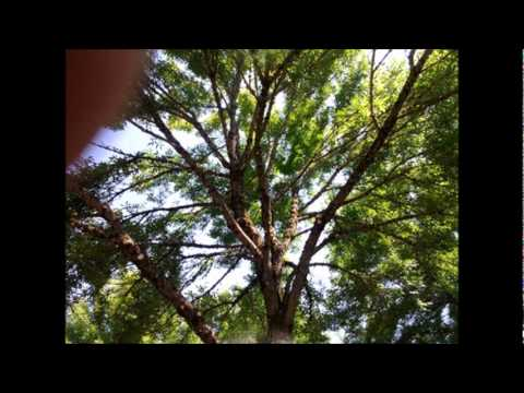 Arbor Art Tree Service.wmv