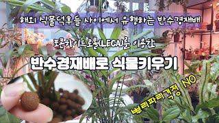 EP#48: 반수경재배로 식물키우기/뿌리파리걱정 NO~…