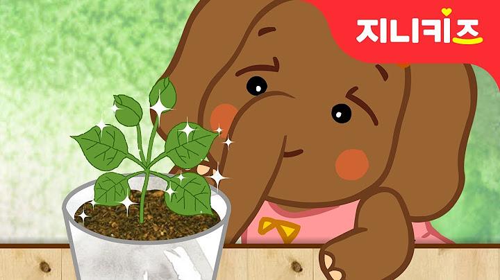 생각이 피어나는 씨앗 | 누리과정 | 봄동화 | 창의동화★지니키즈
