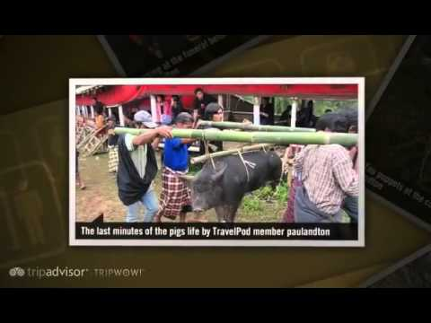 The Funeral Rituals And Ceremonies Of The Toraja Paulandton's Photos Around Makassar, Indonesia
