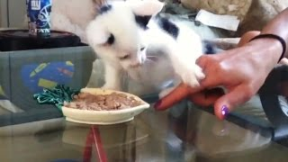Kittens Who Really Don't Want to Share Their Food Compilation