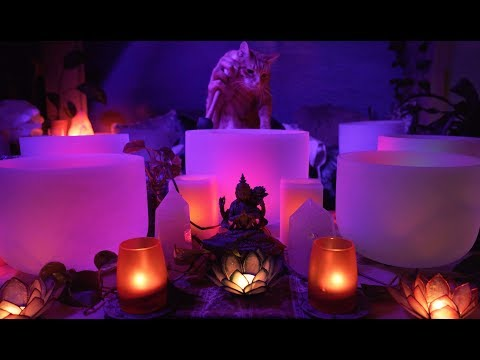 Perseus in Training - Kitty Cat Sound Bath - Kitty Cat Crystal Singing Bowls
