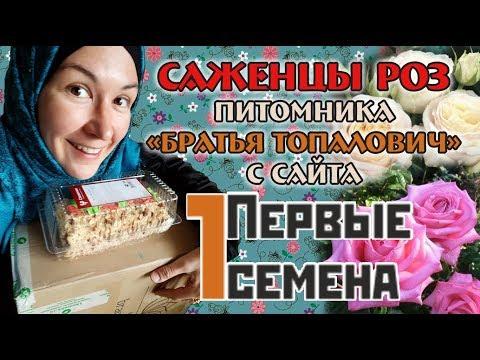 Саженцы роз - интернет-магазин Первые семена | 1semena. Распаковка, обзор посылки.
