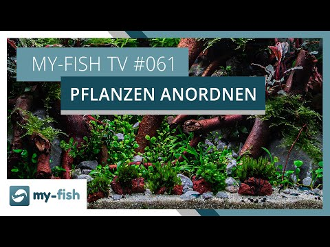Pflanzengruppen im Aquarium richtig einsetzen | my-fish TV #061