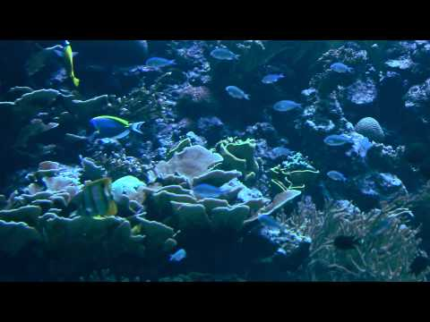 Königlicher Burgers' Zoo - Impressionen Aquarium