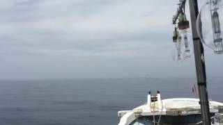 実証 GARMIN バードビューレーダーで水面ギリギリの鳥は映るのか