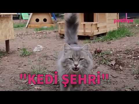 Onların da bir köyü var artık! işte huzurlarınızda Antalya'daki Kedi Köyü!