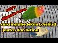 Cukup Pegang Bagian Ini Pasti  Tahu Membedakan Lovebird Jantan Dan Betina  Mp3 - Mp4 Download