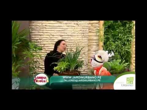Como cultivar varias plantas en maceta youtube for Varias plantas en una maceta