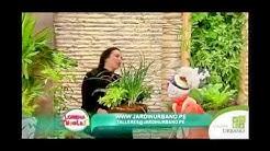 Como cultivar varias plantas en maceta