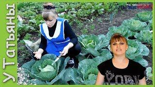 Как устранить незавязку капусты? Причины почему не завязывается капуста.