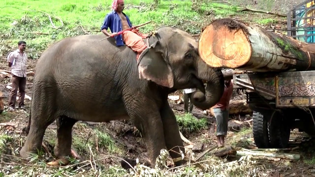 Copy of THE ELEPHANT AT WORK !. HD...avi - YouTube