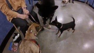 Puppy Training - Intermediate Class