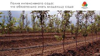 видео Как сделать систему капельного полива деревьев?