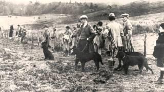 Labrador Retriever Club - Meet The Breed