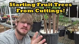 how to grow fruit trees from cuttings figs pomegranates and elderberries