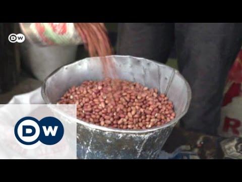 Das Ende der großen Erdnussernten | Global 3000