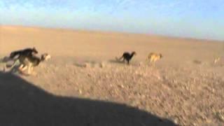 هدد الاحساء التنشيطي وفوز قناص_تغطية القحطاني505