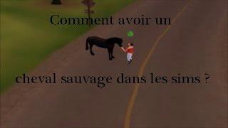 Tuto 1/Comment avoir un cheval sauvage dans les sims 3 animaux et cie