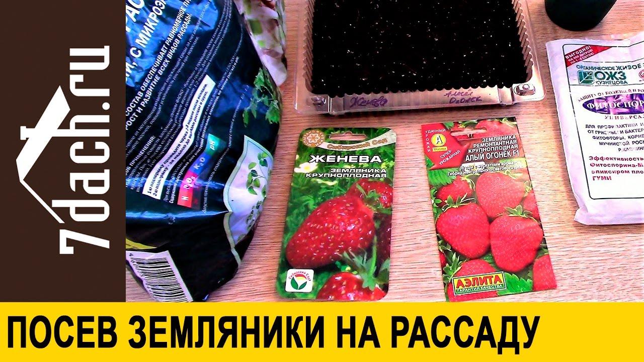 Как посеять землянику на рассаду - 7 дач - YouTube