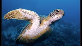 Bonaire SCUBA Diving Trip w/GoPro