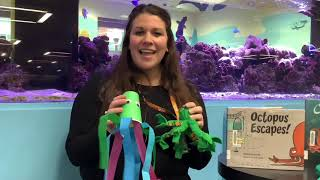 video thumbnail: Octopus Virtual Story Time!