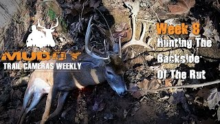hunting the backside of the rut   trail cameras weekly week 8