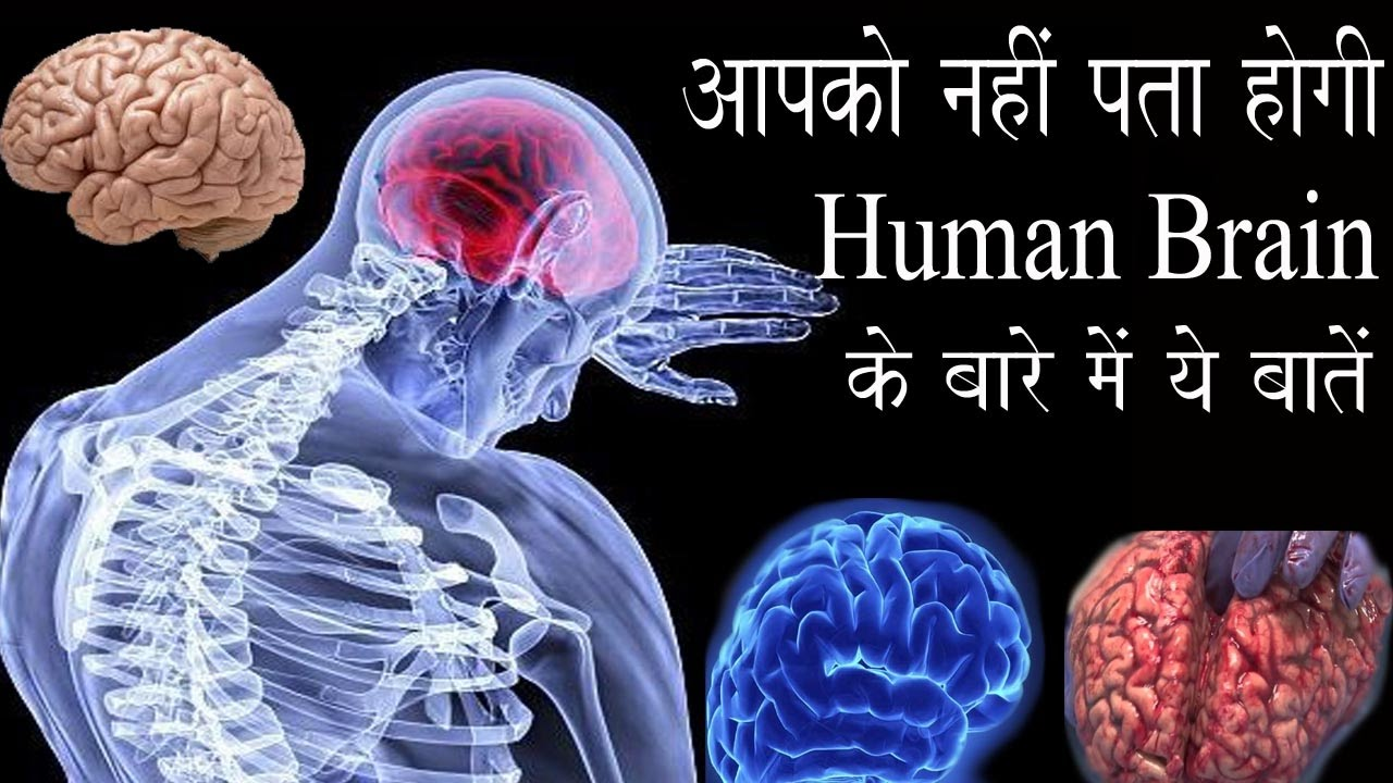 Most Amazing Facts About Human Brain Part 2 Hindi Youtube