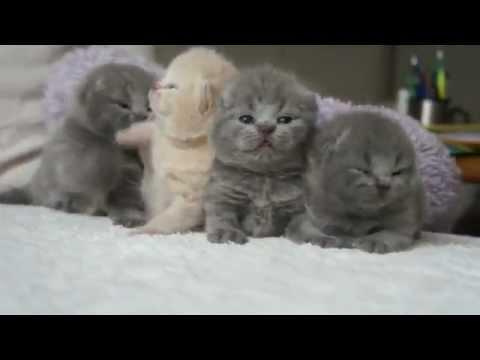 Uykudan uyanan yavru kediler
