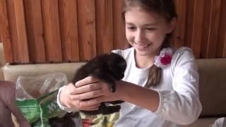 Спасаем котят - Серия 8 ПРИУЧАЕМ К ТУАЛЕТУ // Saving kittens TOILET TRAINING