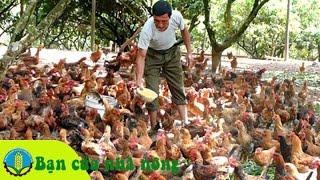 Phương pháp, kỹ thuật nuôi gà bằng thức ăn ủ men vi sinh hoạt tính
