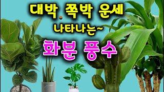 """금전복 대박,쪽박,성공운  나타나는 """"풍수 화분~""""❗️"""