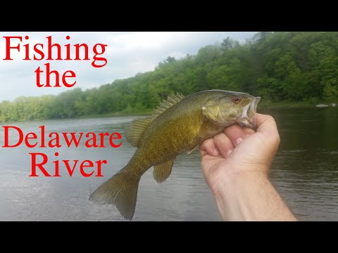 Fishing The Delaware River - New Jersey & Pennsylvania