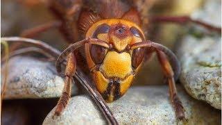 城島茂、「スズメバチ駆除のプロ」として登場し完璧な仕事 「凄すぎる」...