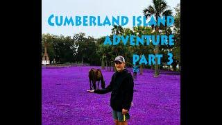 Cumberland Island Adventure Part 3