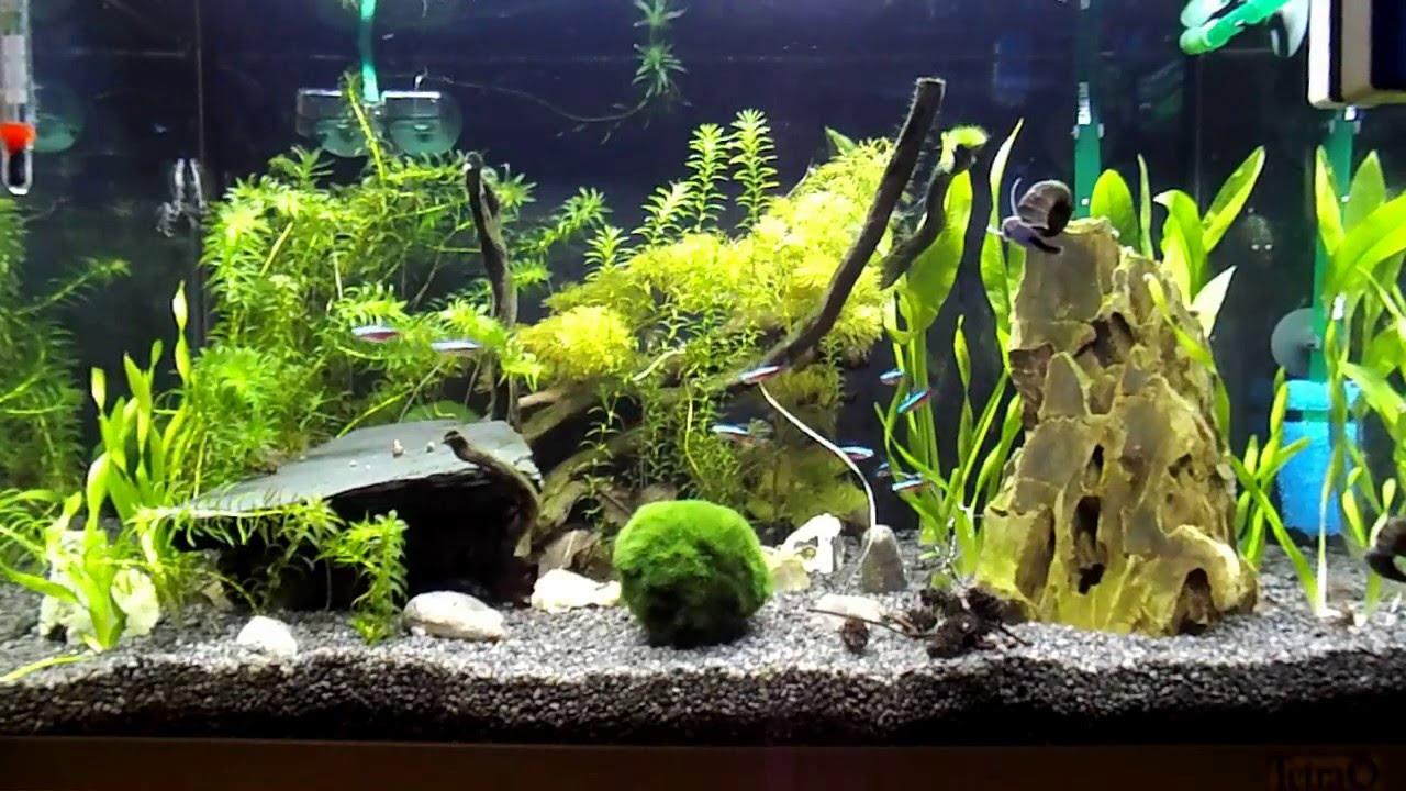 60l aquarium youtube. Black Bedroom Furniture Sets. Home Design Ideas