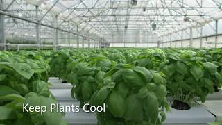 Greenhouse Climate Cooling & Humidity With Fog- MicroCool