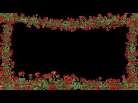Футаж Рамка красные розы 2