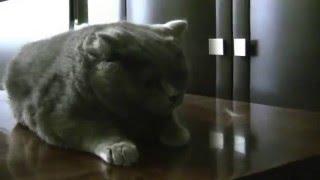 Как вычесать кота чтобы он был плюшевым.