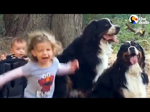 Kids Grow Up With 2 Giant Dogs | The Dodo