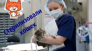 😻Везем кошек в клинику. Стерилизация.