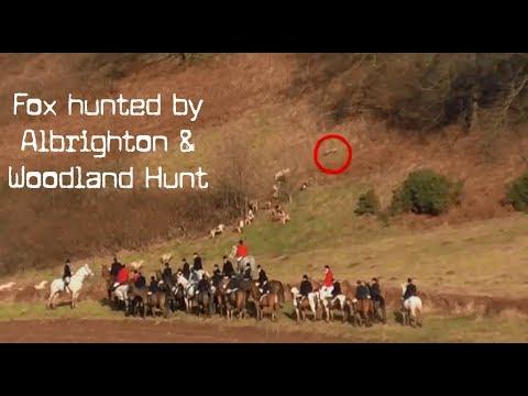 Albrighton & Woodland Hunt Caught Chasing A Fox